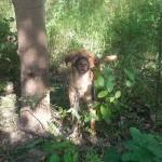 Przywiązał psa do drzewa i zostawił
