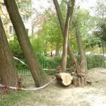 Drzewo runęło na plac zabaw