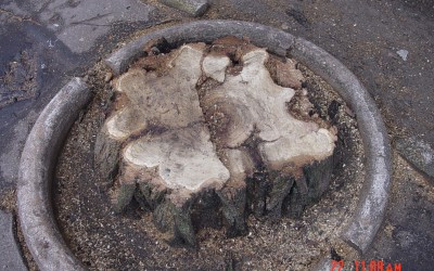 wycinka drzew Piastów
