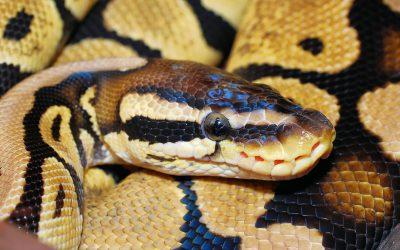 W łazience znalazła węża