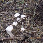 Targówek: słono zapłacą za nielegalną wycinkę drzew