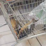 Makabryczne odkrycie w Auchan Łomianki. Żywe karpie bez wody