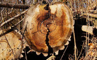 kara-milion-wycinka-drzew-grodzisk-mazowiecki
