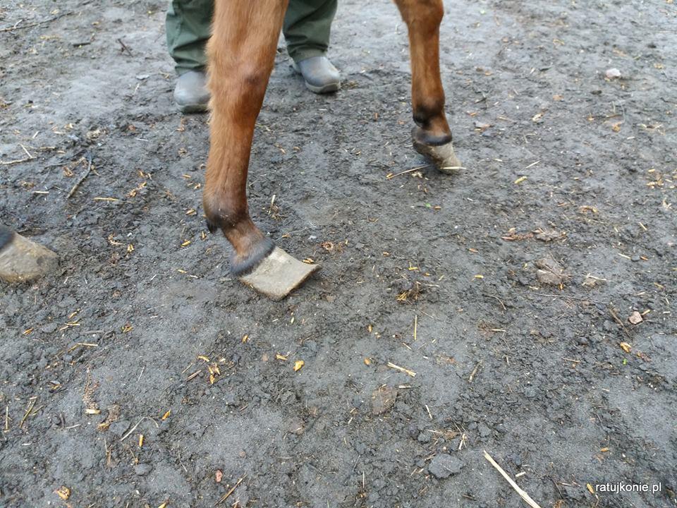 konie-puszcza-marianska-3