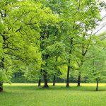 Dwa nowe parki powstaną w Ursusie i na Mokotowie