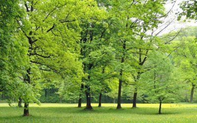 nowe-parki-mokotow-ursus