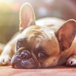 Uwaga! W okolicach WKD Pruszków ktoś rozrzuca trutki na psy