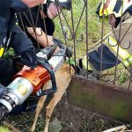 Strażacy uratowali zakleszczonego psa i sarnę