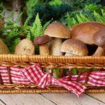 Prawdziwy wysyp grzybów w naszym regionie! Gdzie znaleźć najlepsze okazy?