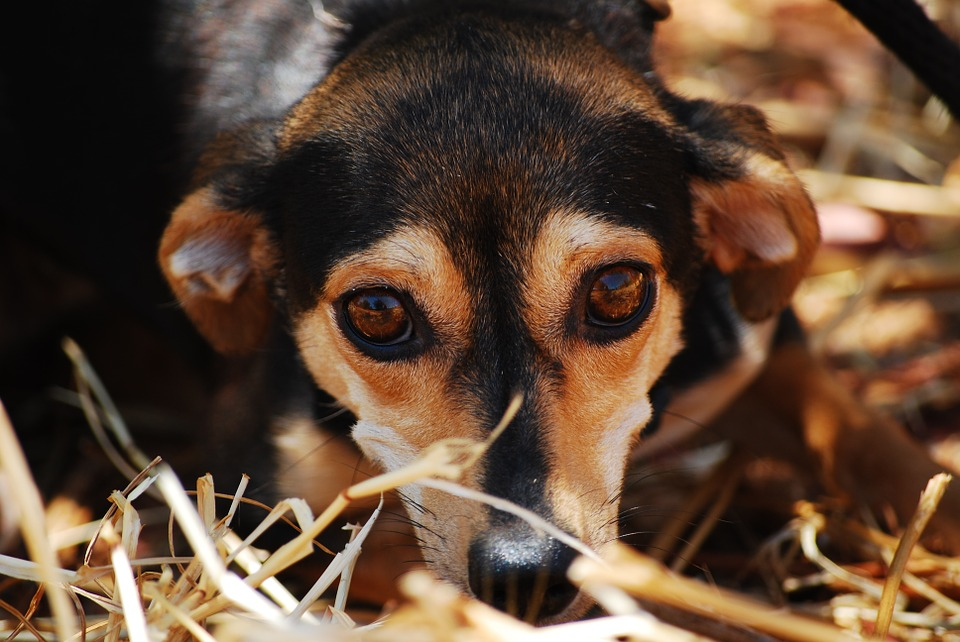 pies-przywiazany-do-drzewa-warszawa-rekodzielnicza