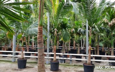 ogrod-tropikalny-mszczonow