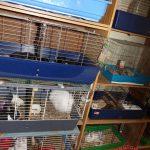 Zgroza w Żyrardowie. W małym mieszkaniu trzymali 150 zwierząt!