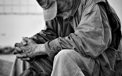 bezdomny-las-makowka