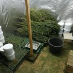 9 kg marihuany w powiecie pruszkowskim