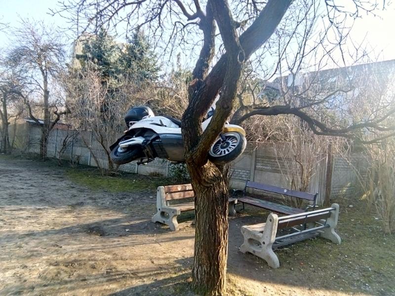 skuter-na-drzewie