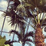 Coraz bliżej otwarcia Park of Poland. Do Mszczonowa przyjechały pierwsze palmy i bungalowy!