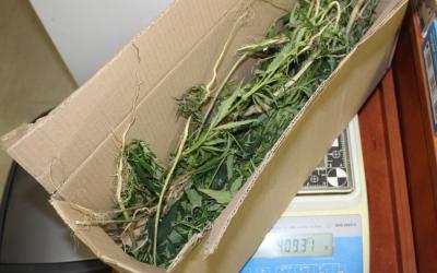marihuana-autobus-warszawa