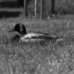 Kijem zatłukł kaczkę w parku Skarbków [UWAGA! DRASTYCZNE ZDJĘCIA]