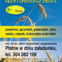 Kupie zboża paszowe i konsumpcyjne, pszenicę, pszenżyto,owies, jęczmień, żyto, proso, kukurydzę, gr