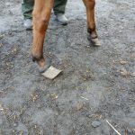 Dramat koni pod Żyrardowem, już zostały odebrane właścicielom. Aby im pomóc, wystarczy sms [FOTO]