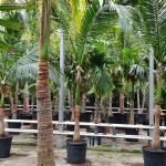 W parku rozrywki pod Mszczonowem powstanie niesamowity ogród tropikalny [FOTO]
