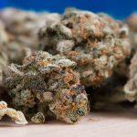 Haszysz w Latchorzewie, marihuana w Zielonkach