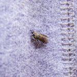 Zamgławianie ULV – sposób nie tylko na insekty [MAT. PARTNERA]